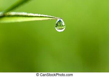 waterdrop, 草