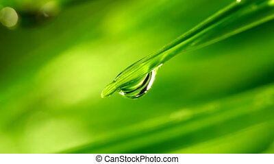 waterdrop falling from grass leaf