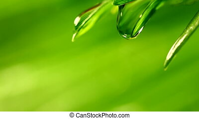 waterdrop falling from grass leaf closeup