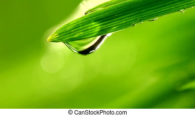 waterdrop falling from grass