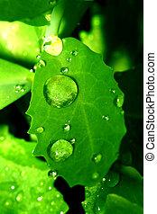waterdrop, natural