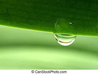 Waterdrop on a plant leaf