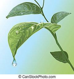 waterdrops, en, hojas