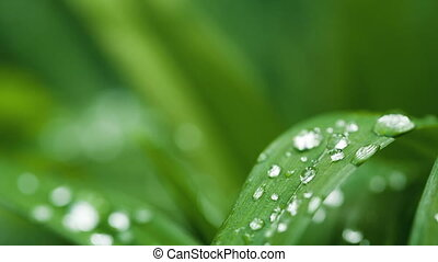 Waterdrops on a leafe
