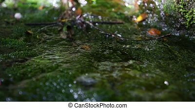 Waterdrops on the forest rocks.