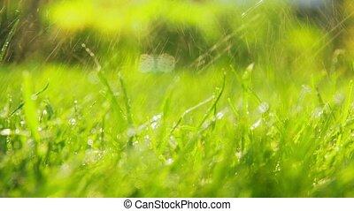 watered, на открытом воздухе, газон, или, зеленый, трава
