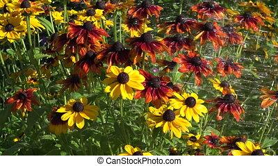 watered flowers in garden, 4K
