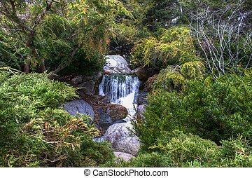 Waterfall and Cedar Trees