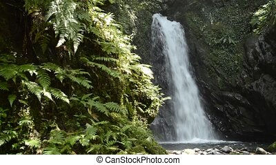 Waterfall and ferns - White waterfall falling along bedrock...
