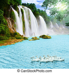 Waterfall - Beautiful waterfall at sunny day. Swans on the ...
