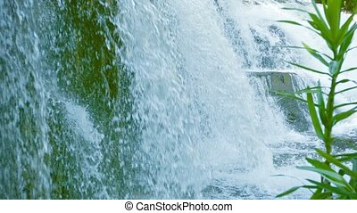 Waterfall close-up. Spray of pure water and the plant