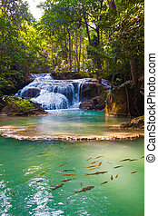 waterfall., erdő, mély