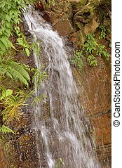 Waterfall  for in a Forest