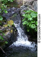 Small waterfall in a mountain stream - cold & lush
