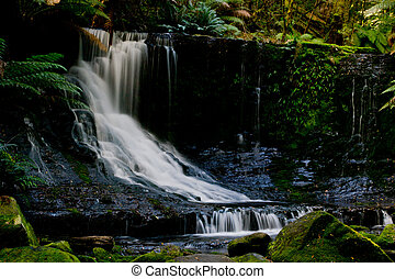 Waterfall in a rain forest