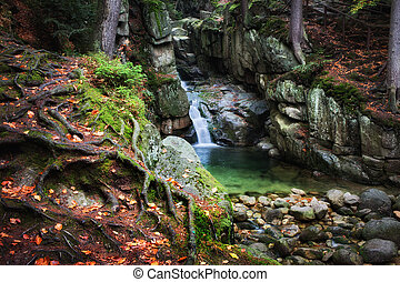 Waterfall in Enchanted Forest
