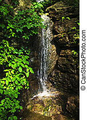 Waterfall in forest - Small waterfall falling down rocks in...