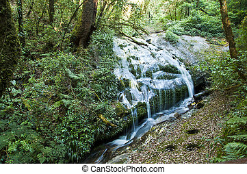 Waterfall in forest.