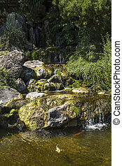 Waterfall in Japanese garden with fish