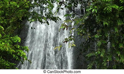 Waterfall in Rainforest - Waterfall in El Yunque National...