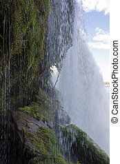Waterfall in the Canaima Lagoon, Venezuela