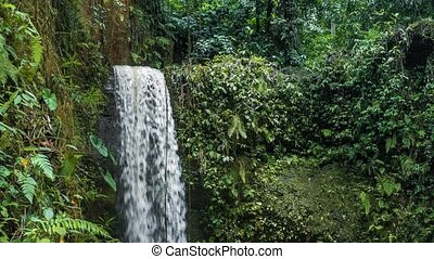 Waterfall in tropical jungle with lush green plants. High humidity