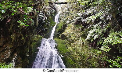 Waterfall in tropical rainforest, New Zealand - Secluded ...