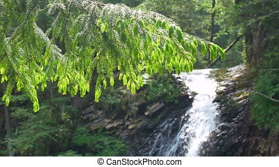 Waterfall nature tree branches - Waterfall and beautiful...