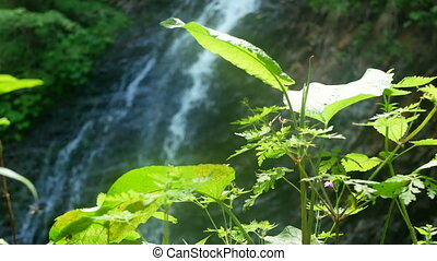 Waterfall nature tree branches - Waterfall and beautiful...