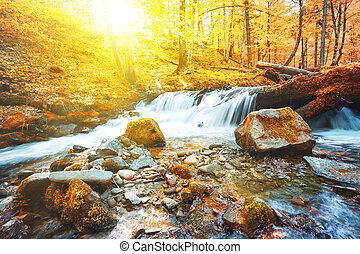 Waterfall on river in forest