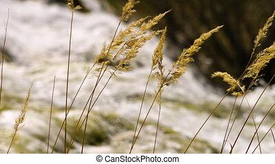 Waterfall seen through tall grass - A steady, racking focus,...
