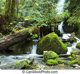Waterfall - waterfall in Olympic National Park,USA