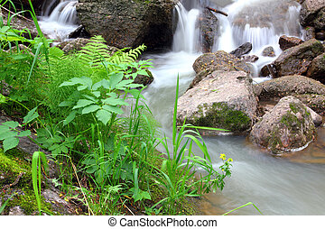 waterfall stream in summer woods