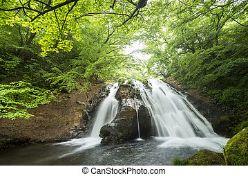 Waterfall surrounded by forest