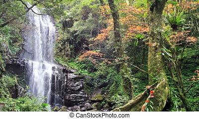 Waterfall with nice maple tree