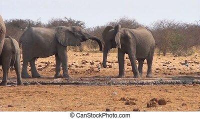 waterh, boueux, éléphants africains