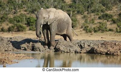 waterhole, éléphant africain