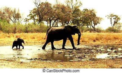 waterhole, éléphants, africaine, partir