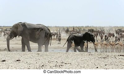 Waterhole in Etosha with animals