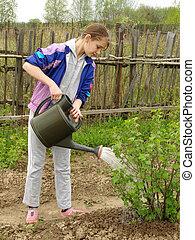 watering 1