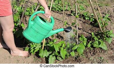 watering beans - barefoot girl in shorts in garden abundant...