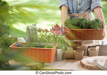 Watering can and flower pots