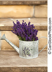 Watering Can and Lavender isolated on white