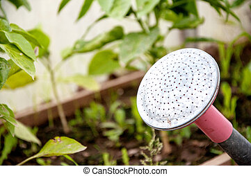 Watering can in a garden square among plants.