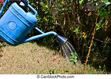 Watering can - Water pouring from blue watering can onto a...