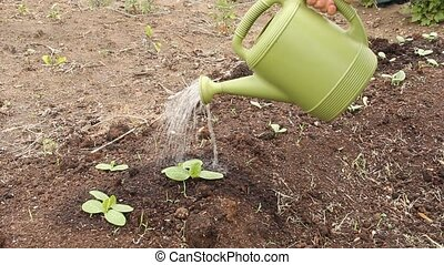 watering can - watering plants with water can