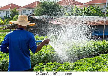 Watering - Close up farmer watering plant via plastic hose