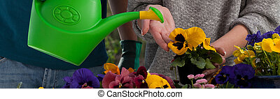 Watering colorful flowers
