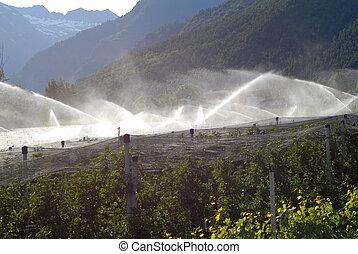 watering field