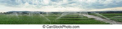 Watering fields panorama